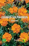 COSMOS SULPHUREUS (orange) - BIO